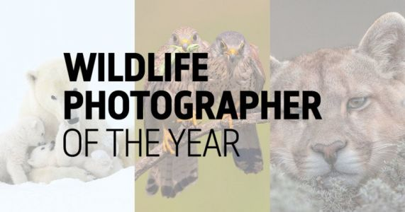 25 People's Choice Photos for Wildlife Photographer of the Year 2019