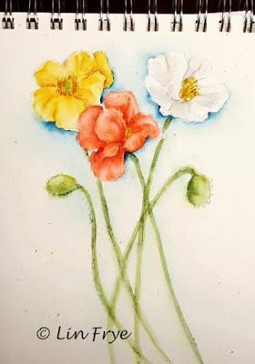 Iceland Poppies - Lin Frye