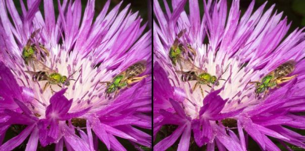 Taking Macro Photography into 3D