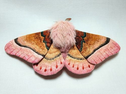 Giant Fabric Butterfly and Moth Sculptures Hand-Crafted by Yumi Okita