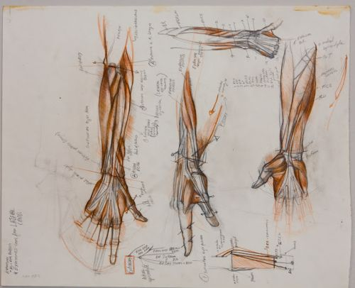 Sabin Howard Webinars; Intensive Figure Construction and Anatomy for Artists