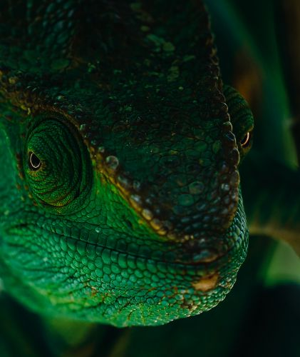 Stunning Portraits of Madagascar's Reptiles and Amphibians by Ben Simon Rehn