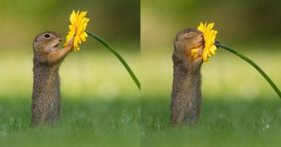 Photographer Catches Squirrel Stopping to Smell a Flower