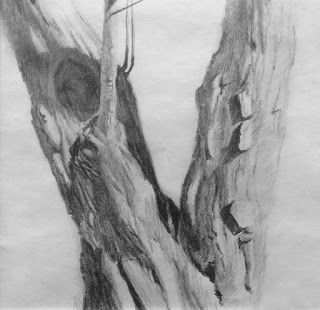 PENCIL STUDY by TOM BROWN