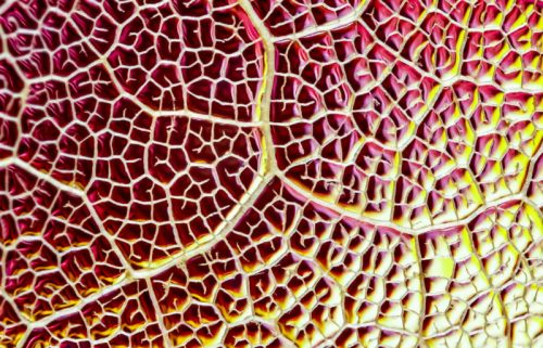 How to Shoot Creative Macro Photos of Skeleton Leaves