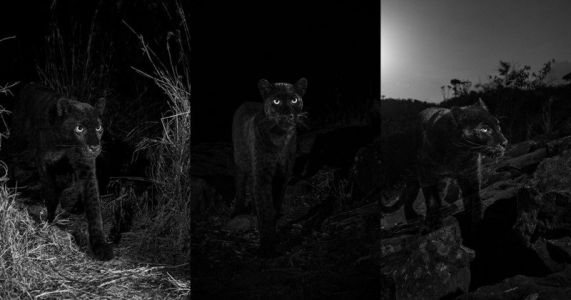 My Quest to Photograph the Most Elusive Cat in Africa