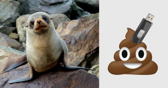 USB Stick Found Inside Seal Poo with Photos Intact