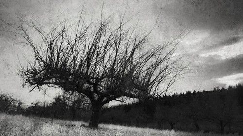 Drpajchiwo:paysage reduced/ a dormant orchard 4