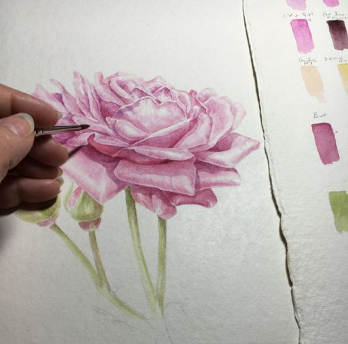 Painting Roses and Colour Mixing: Sheffield Florilegium Workshop