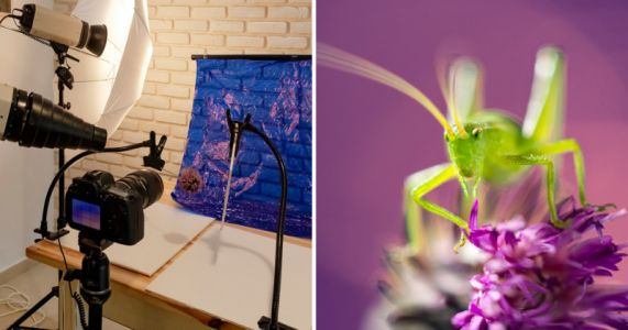 How I Shoot Insect Macro Photography in My Home Studio