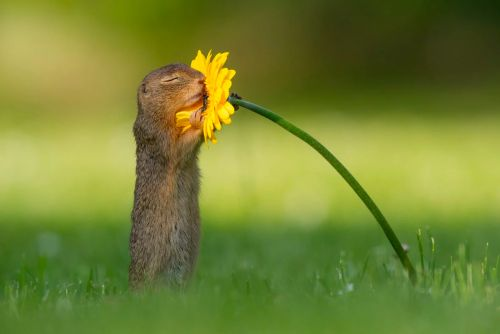 Stop and Smell the Flowers: Dick van Duijn Captured a Squirrel's Floral Delight