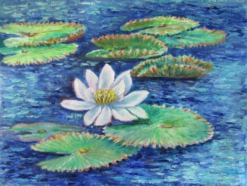 1774 Wafting White Water Lily
