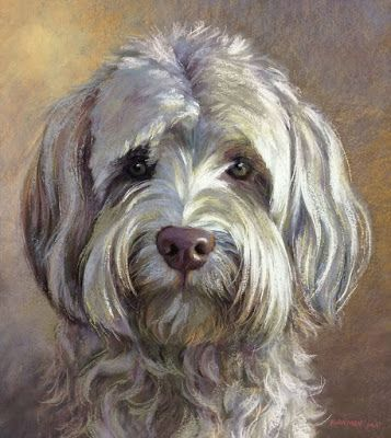 Dash - the other Labradoodle Commission
