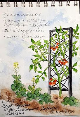 Journal - Brunswick Botanical Gardens - Tomatoes - Lin Frye, North Carolina