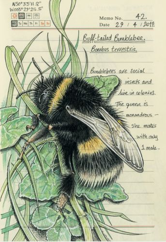 Meticulous Illustrations Document the Flora and Fauna Observed throughout the Devon Countryside