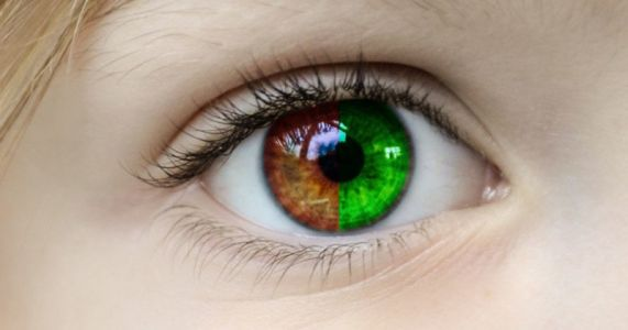 The Red and Green Specialists: Why Human Color Vision is So Odd