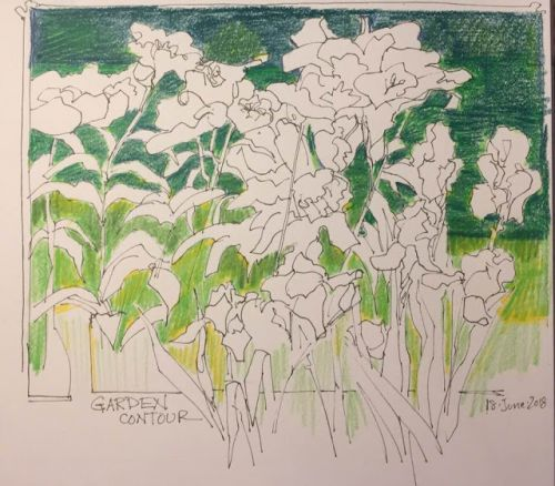 """Day 252 """"Garden Contour"""" ink and pencils 8 x 9"""