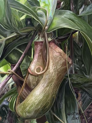 "Botanical Art, Digital Botanical Painting ""Carnivorous Pitcher Plant"" by Colorado Artist Nancee Jean Busse"