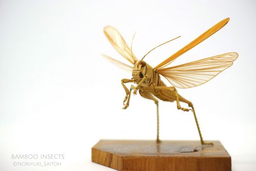 Expertly Crafted Bamboo Insects by Noriyuki Saitoh Appear Poised to Take Flight