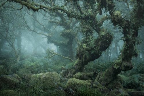 Enchanting Photographs of a Misty English Wood by Neil Burnell