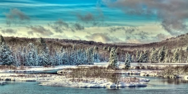Snowy Trees on the Moose River