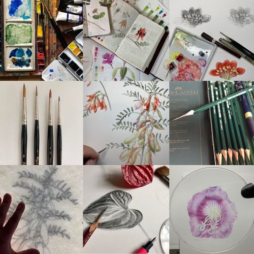 Equipment and Materials for the Botanical Artist