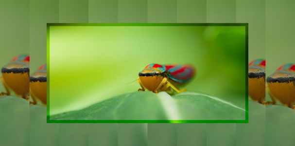 How to Shoot Handheld Focus Stacks for Macro Photography