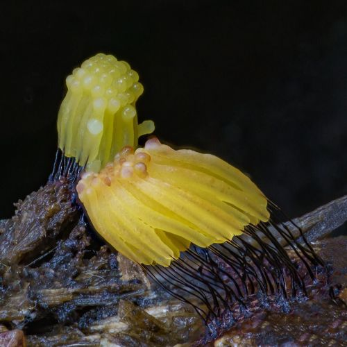 Self-Taught Nature Photographer Alison Pollack Tracks the Fascinating Fungi of Northern California