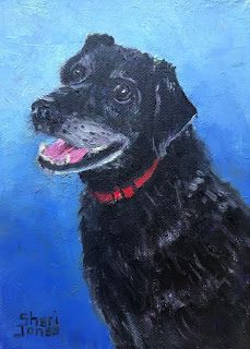 Ziggy, New Contemporary Pet Portrait Paintings by Sheri Jones