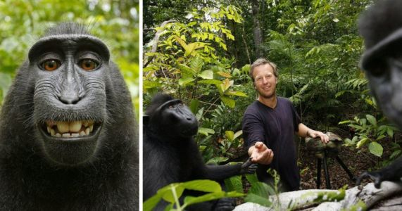 Court Refuses to Toss Lawsuit Between Monkey and Photographer