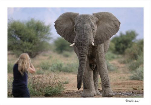 The Art of Safari: Tips for Shooting African Wildlife