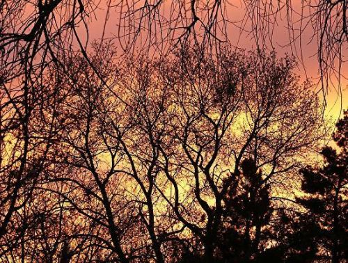"Fine Art Photography, Trees, Sunset ""Bare Naked Branches"" by International Photographer Kit Hedman"