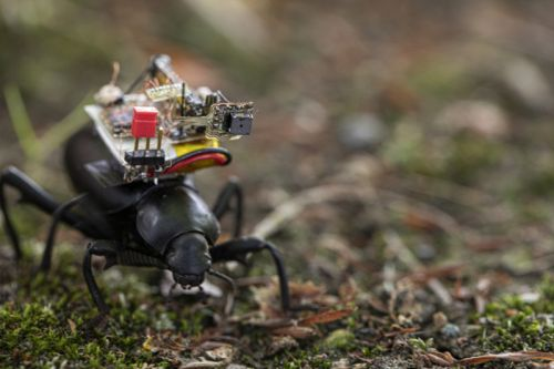 These Researchers Have Created a Tiny Camera Backpack for Beetles
