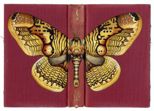 Oversized Butterflies, Moths, and Beetles Cloak Vintage Books in Paintings by Rose Sanderson