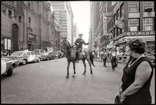 Horse Crossing: 1964