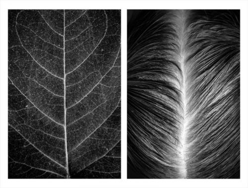 Photos That Show Similarities Between the Human Body and Nature