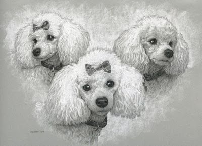 Emma - a poodle commission