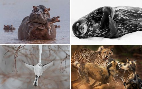 2019 Wildlife Photographer of the Year Shortlist Captures Nature's Beauty and Its Brutality