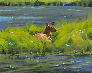 "Western Wildlife, Yellowstone Landscape Painting, ""Elk Calf Study"" by Nancee Jean Busse, Painter of the American West"
