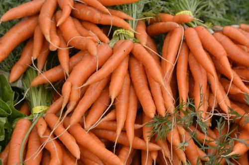 Could Carrots Make Concrete Stronger and Greener?