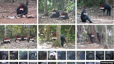 Facial Recognition Tech Used for Animals, Too