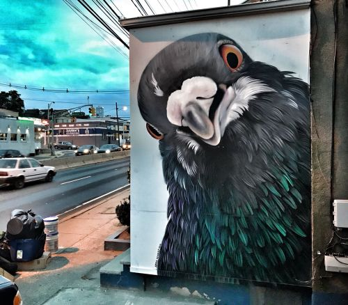 Extraordinary Pigeons Take Flight in Large-Scale Feathery Murals by Adele Renault