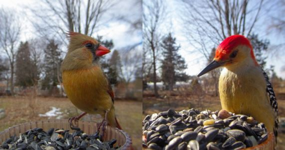 This Feeder-Mounted Camera Catches Striking, Closeup Photos of Birds