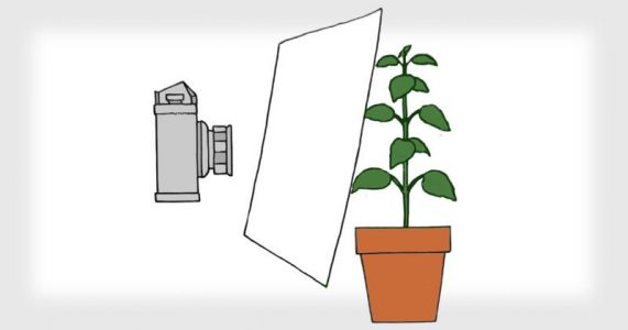 How to Use a Camera to Measure Foot-Candles of Light for Houseplants