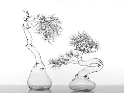 Bonsai Tree and Sea Creature Sculptures Crafted from Blown Glass by Simone Crestani