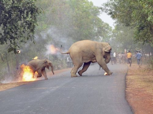 Photo of Baby Elephant on Fire Wins Wildlife Photo Contest