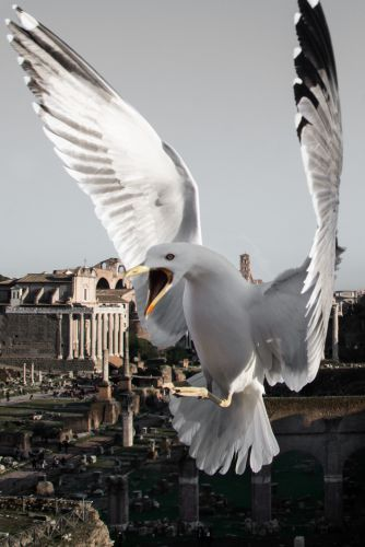 Seagulls and Pigeons Photobomb Shots of Rome by Photographer Skander Khlif