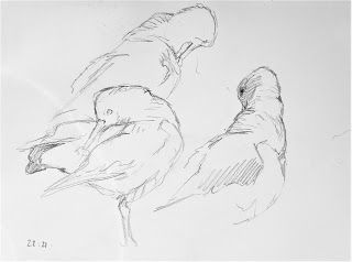 Drawing & Painting Birds and Landscape in Orkney