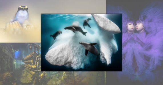 Photo of Seals 'Living' in an Iceberg Wins Underwater Photographer of the Year 2020