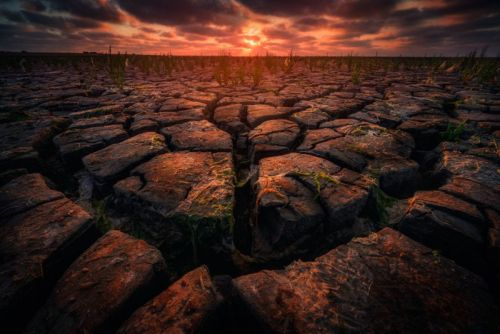 10 Photos That Show the Extreme Drought on the Dutch Coastlines
